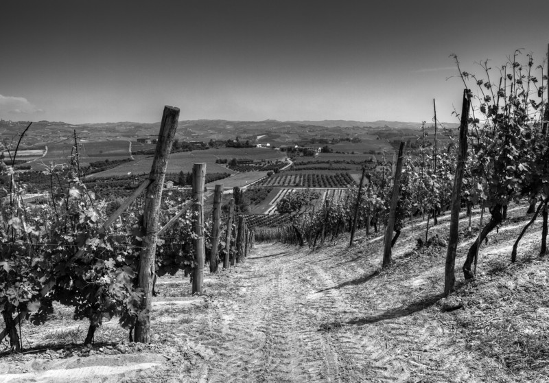 Barolo vineyards near the estate of Luigi Oddero & Figli, looking east. 3 exposure HDR. Best viewed (laptop) XLarge, hit f11 key), PC monitor (X2Large, hit f11 key).