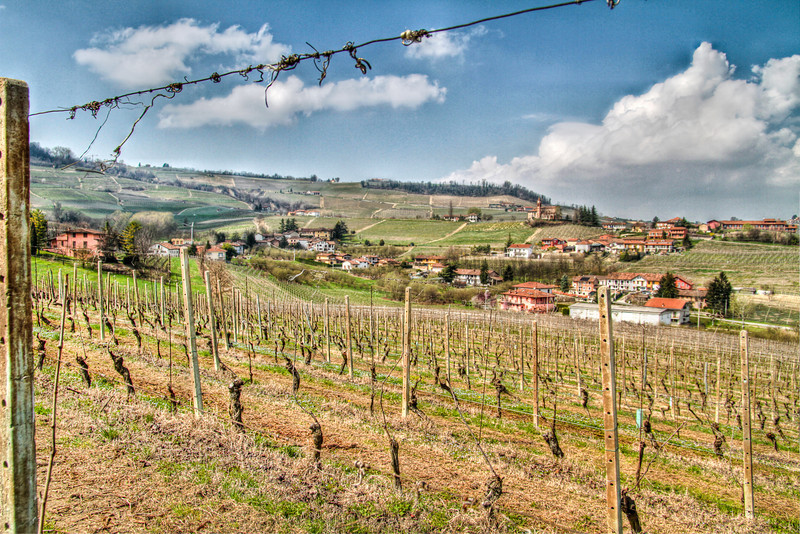 Vineyard workers are finishing their last bit of pruning at this time of year (end of March, 2011), and bud break here in Barolo is but a few weeks away.