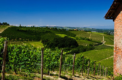 I'm standing on top of a rather famous vineyard in the heart of Barbaresco while taking this image of a (rare) perfectly clear-sky day in the Langhe, with the Alps visible in the background. 3 exposure HDR, taken mid-morning, facing South/Southwest.