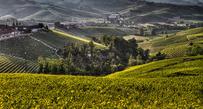 One day, while standing on the east side of the Langhe, between Monforte d'Alba and Castiglione, I was able to capture an image of the valley as a rain cloud approached. A line, cut through the Cru vineyards, can be seen as the rain approaches. Facing toward La Morra.