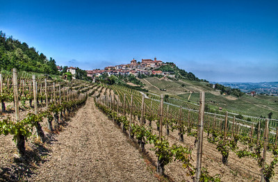 Approximately 20 days after bud-break on a startlingly clear day. Brunate vineyard is ahead and off to the right, Cerequio vineyard is behind me, and the ancient village of La Morra can be seen in the distance. 5 exposure HDR.