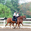 holly hill farm<br /> 9-4-11<br /> photo by claude price