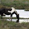 HORSES 17