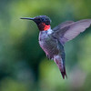 Hummingbirds2013-4Edit