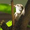 HUMMINGBIRDS 20