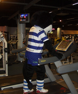 Halicat at the Gym