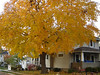 Our House is so beautiful in the Fall