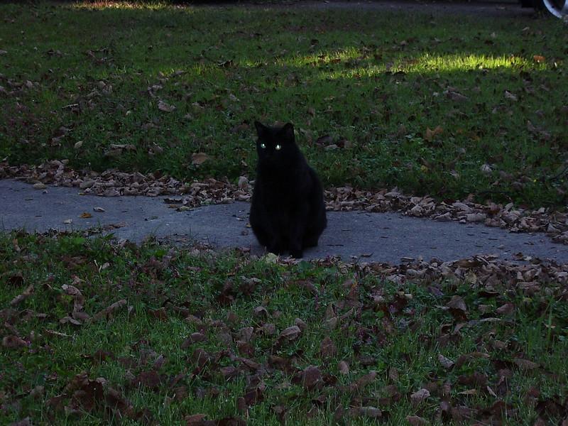 Oscar, our black cat.