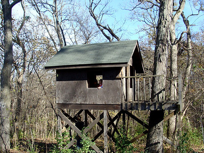 The treehouse..still a focal point for all visiting kids.