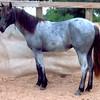AZULS BLUE SPARK