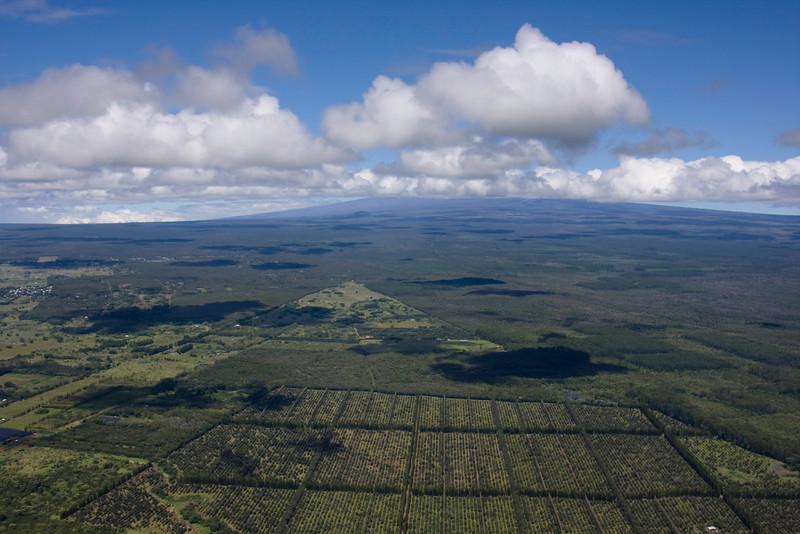 The Macadamia nut fields.