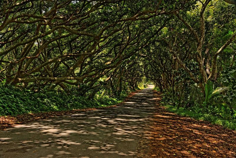 Hilo Coast Road
