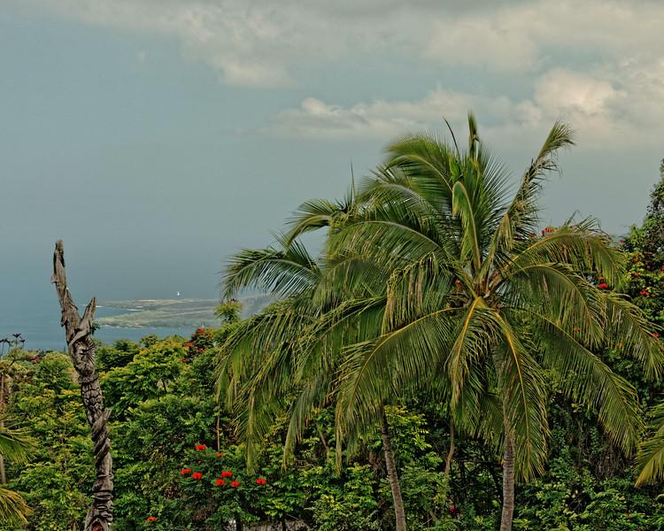 View from Kona Coffee Plantation