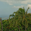 View from Kona Coffee Plantation