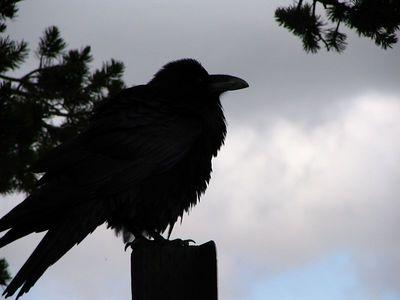Raven2_IMG_2906