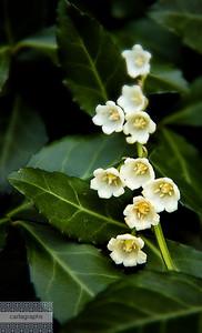flower bells-