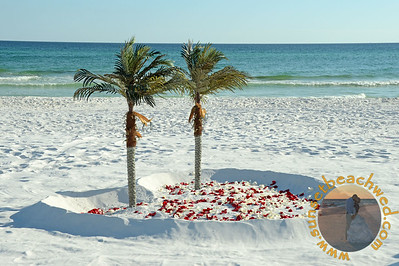 Palms: Filled Heart, Red and Cream Rose Petals