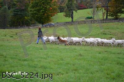 Herding Trials Sept29