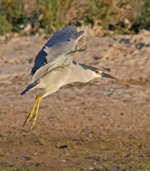 BCNH in flight