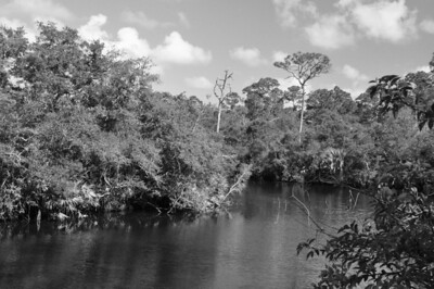 This is the scene opposite the bridge in the previous picture. I've been here numerous times, as well as kayaked the river. It's not an unusual scene for Florida.  Change it to B&W in the camera and it takes on a much different view. Sometimes you just have to look at the normal differently.....