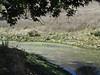 Bob's Pond near Tassajara Creek.