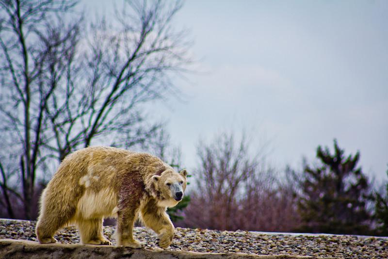 Detroit Zoo - Detroit MI