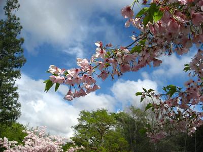 2013.03.31 Hakone Gardens