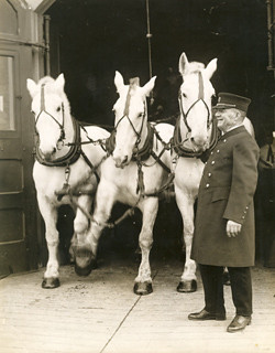 Deputy Chief Matthew P.A. McDermitt is shown here with the horses used to do the last demonstration run of the old horse-pulled steam engines, Newark, December 20, 1923. The horses were replaced by a new modern motorized pumper, ending a picturesque era.
