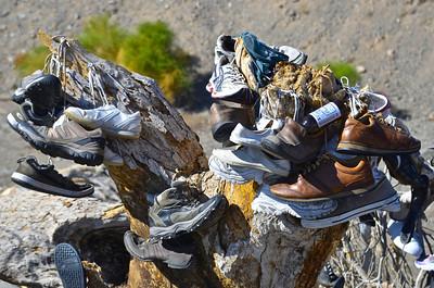 Amboy Shoe Tree, Amboy California.