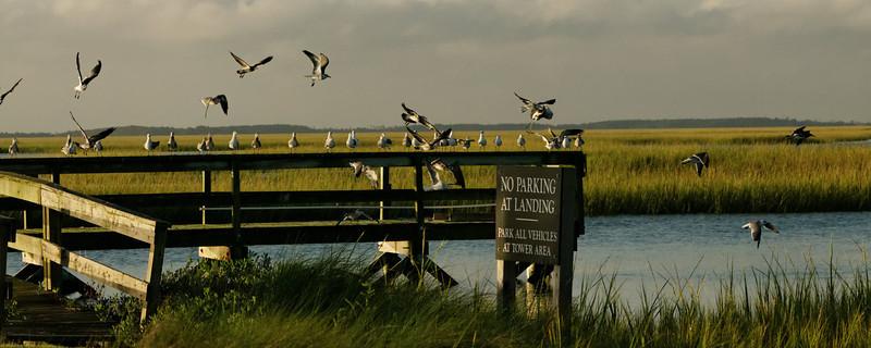 Hobcaw Landing Zone