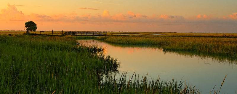 Hobcaw Marshes