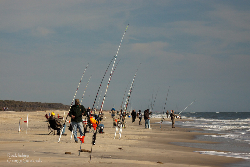 Assateague rock fishing tournament