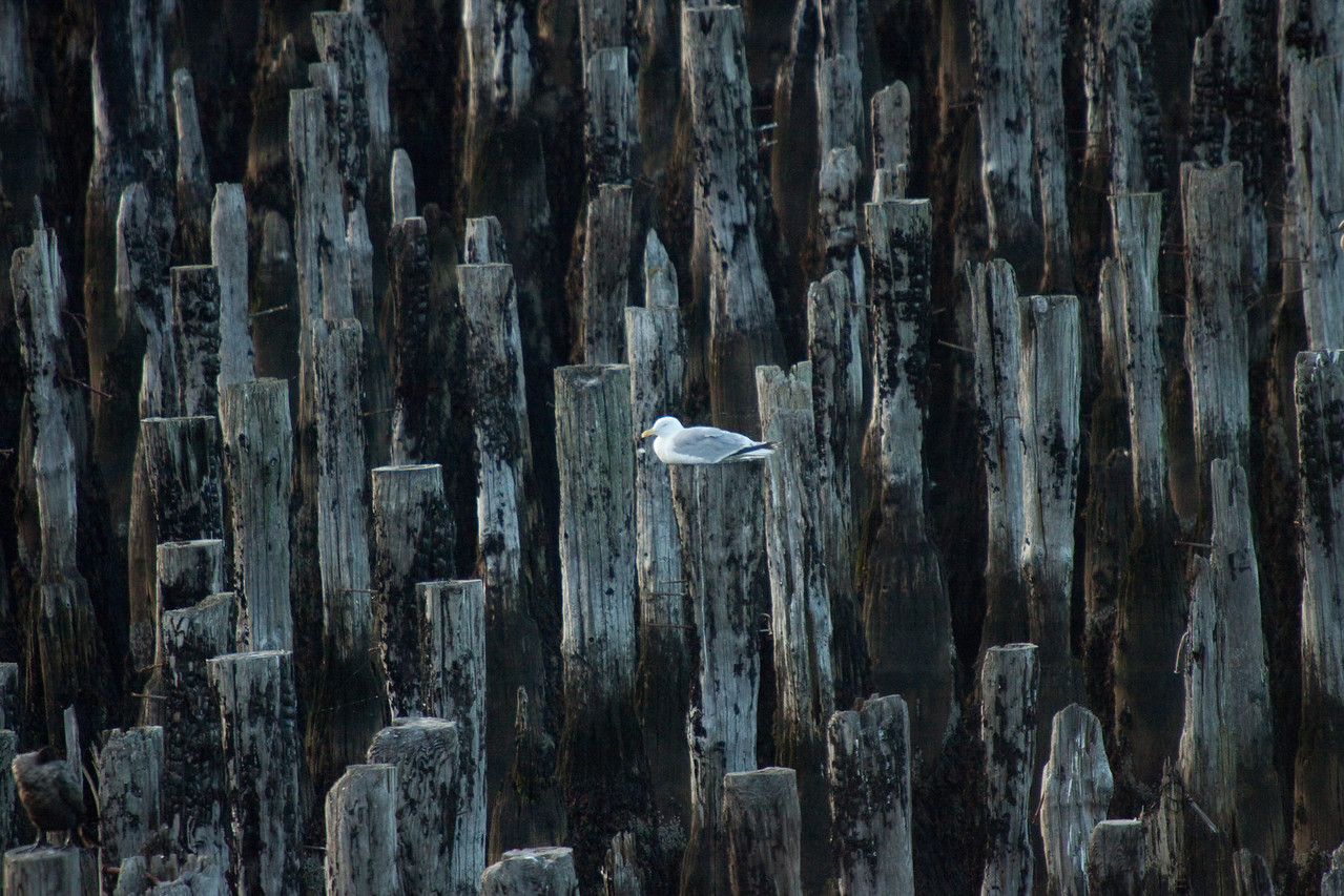 Lone seagull in harbor in Portland Maine
