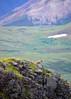 056_Hoary Marmot_DSC0181