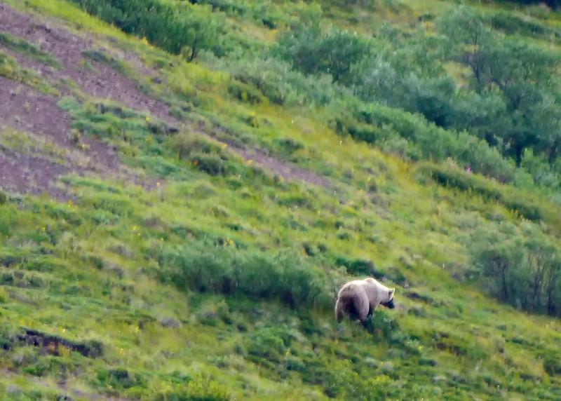 045_Grizzly Bear_DSC0141