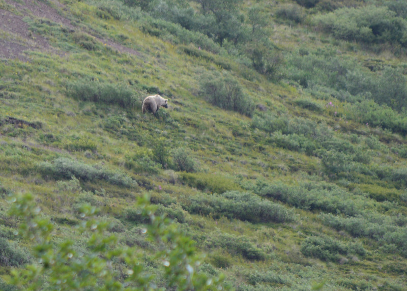 044_Grizzly Bear_02_DSC0141