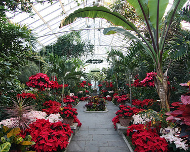 Planting Fields Arboretum in holiday cheer decorations in main greenhouse.