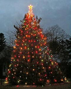 Christmas tree at Planting Fields Arboretum