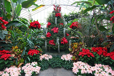 Planting Fields Arboretum green house with holiday decorations