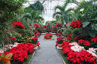 "Planting Fields Arboretum ""holiday"" decxorations 2013."