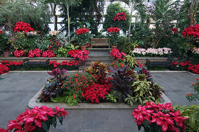 Planting Fields Arboretum in holiday cheer display in main greenhouse.