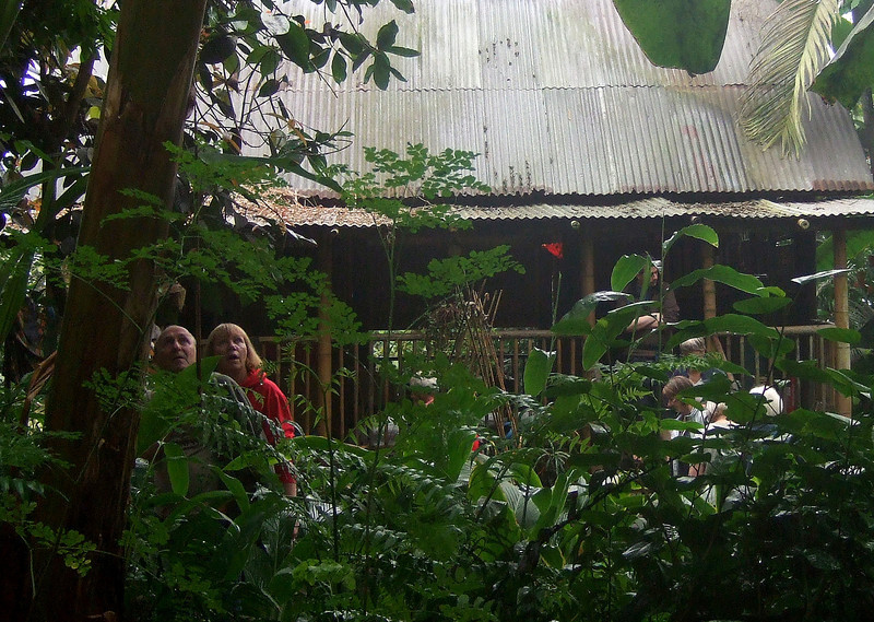 Inside the Rainforest Biome.   What have they seen?