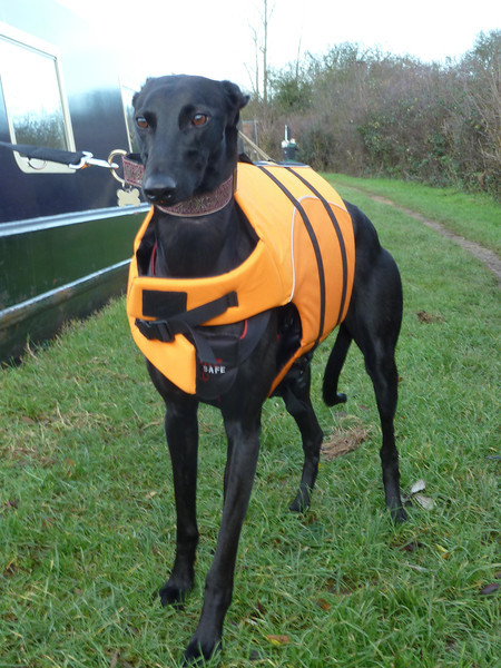 Emmy with her new lifejacket
