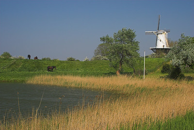 Windmill and horses near Veere (Holland)