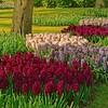 More hyacinths