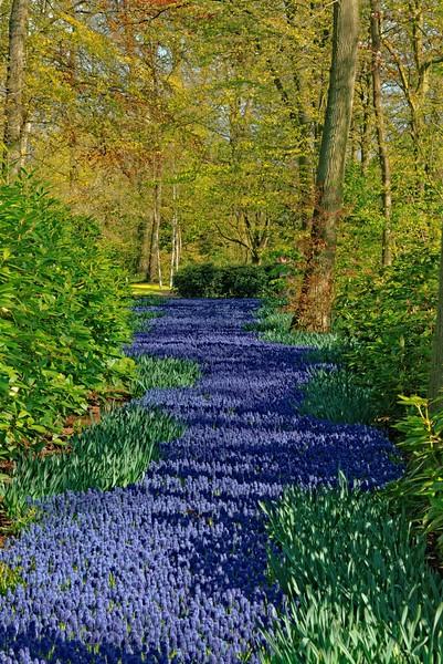 Hyacinth path