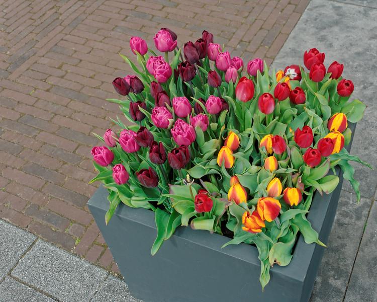 Planter on an Amsterdam Street