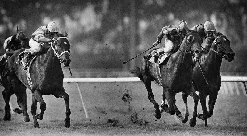 . Three race horses, from left to right, Flying Pidgeon, Dahar, and Strawberry Road, are seen competing the Charles Whittingham Memorial Handicap held annually at Hollywood Park in Inglewood. Flying Pidgeon and his rider Santiago Soto won the race. Photograph dated May 26, 1986.  (Los Angeles Public Library)