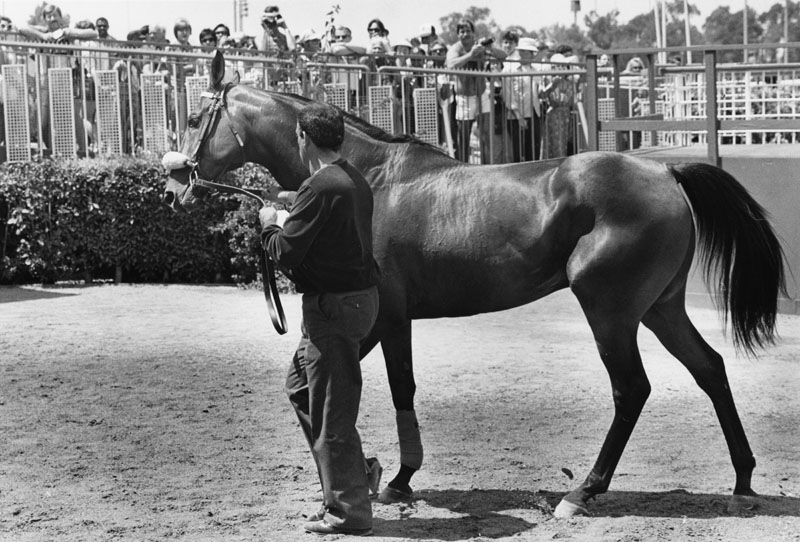 . John Henry, a successful and popular race horse, is being presented to a crowd of fans and members of the media at Hollywood Park in Inglewood. Photograph dated July 4, 1985.   (Los Angeles Public Library)