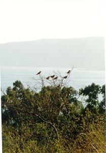 Galilee 3